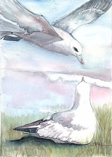 Gull Gossip Original Water ColourFramed Original