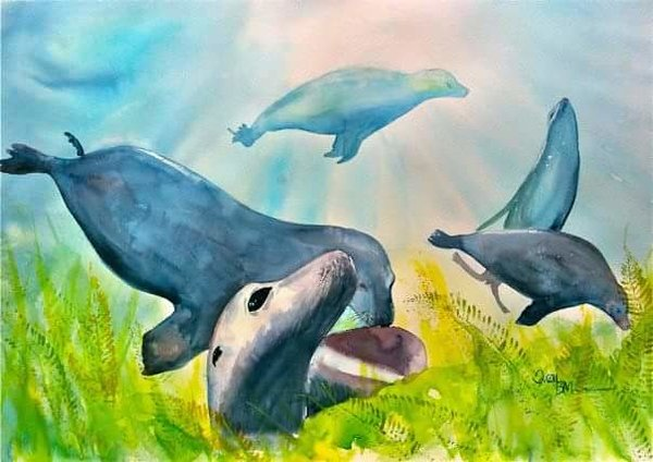 Seals underwater Watercolour